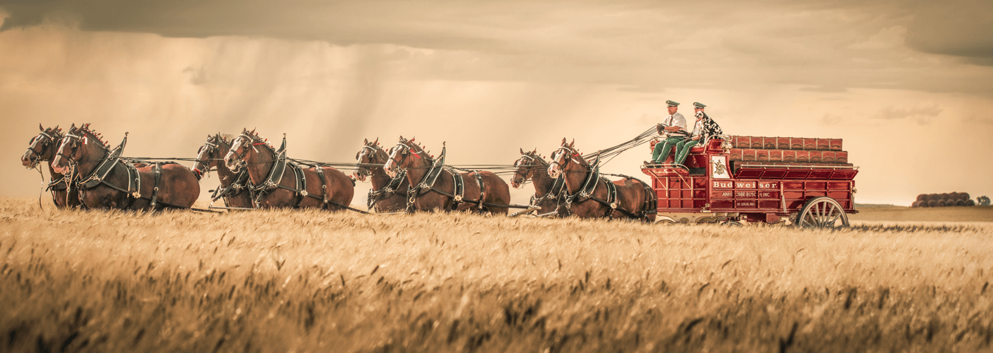 The Keeper of the Clydesdales: A Conversation with Director of Heritage Jeff Knapper