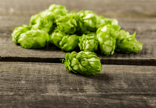 "Hops: The ""Spice"" of Beer"